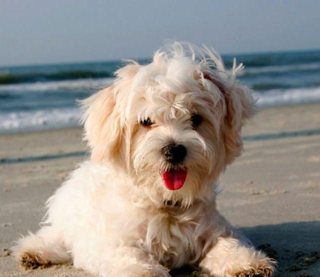 dog-at-beach