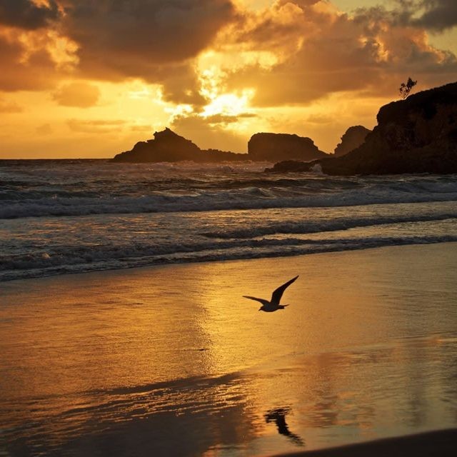 seagull-at-sunset