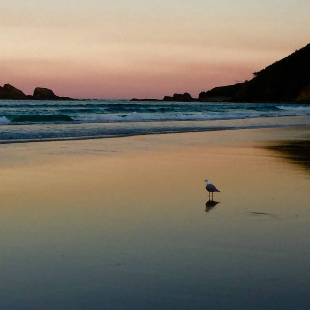 seagull-sunset